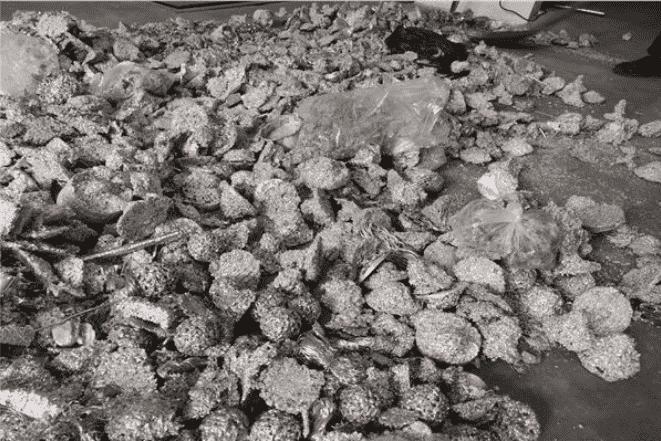 晋城无铅锡块回收厂家上门回收