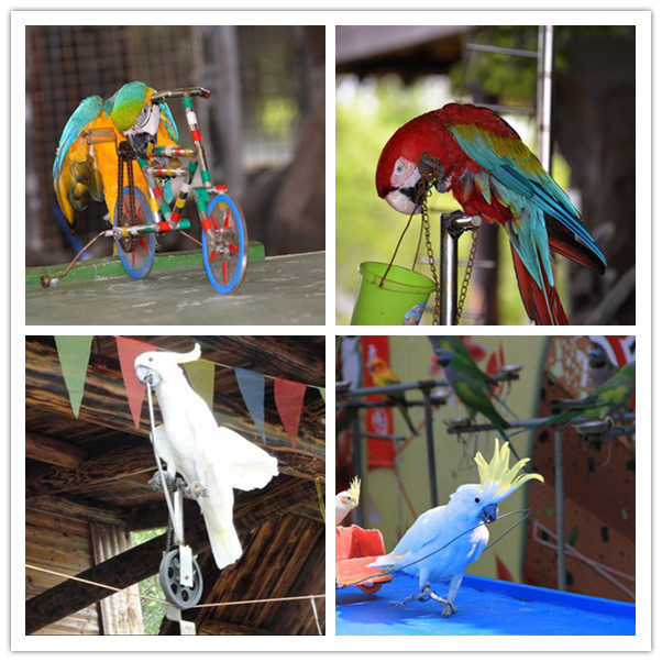 雅安市附近鹦鹉表演百鸟展租赁