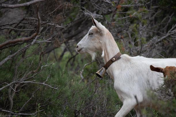 周口哪里有卖波尔山羊小尾寒羊的养殖基地