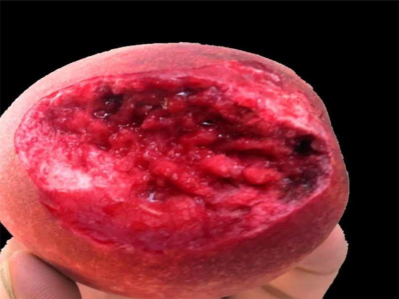 陕西西安5月成熟桃苗送货报价