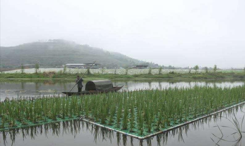 大同水生种植浮盆(厂家批发)