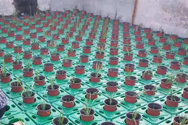 宜城水生种植浮盆适合种植什么植物