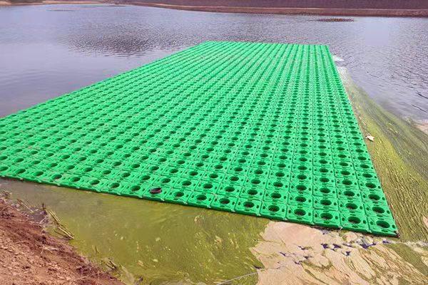 米脂水生种植浮盆哪里便宜