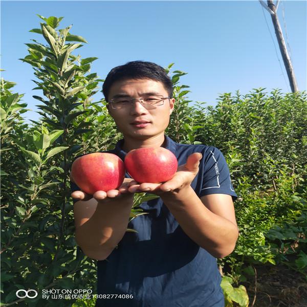 红富士苹果苗木烟富8号苹果树咋样苹果苗多少钱