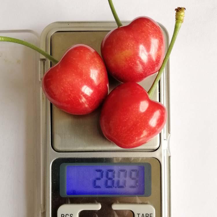 七台河樱桃树苗 价格U2-7樱桃苗优惠价格