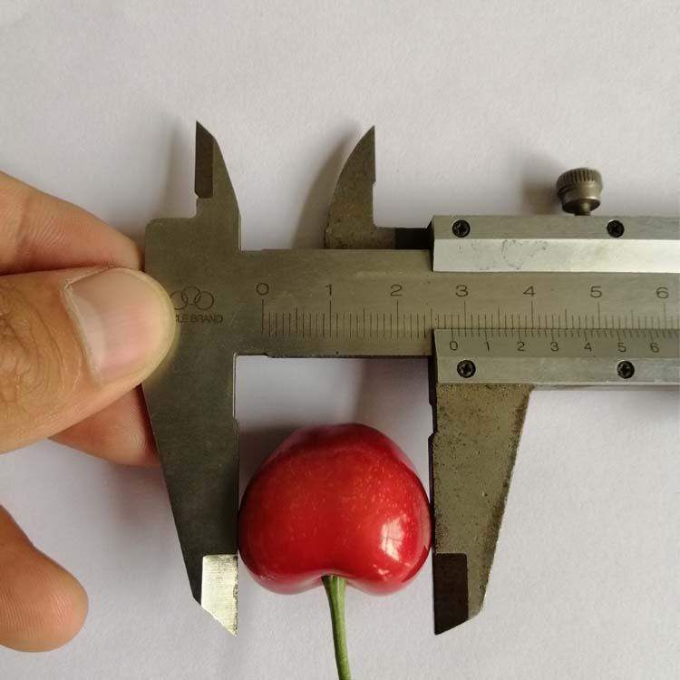 温州吉塞拉小苗价格公正合理,欢迎选购俄8樱桃苗批发基地