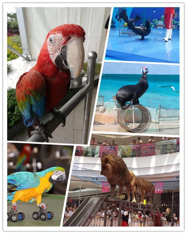烈山海洋动物表演鱼缸展览志成租赁公司