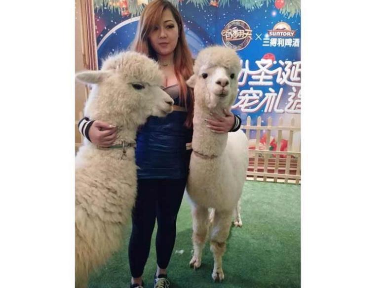 温顺可爱的羊驼(草泥马)市场价&兰州羊驼/珍禽养殖基地