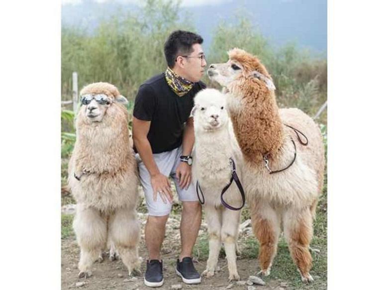 在线咨询:羊驼厂家电话--乐山