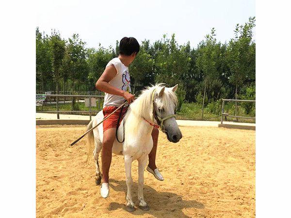 柳州社兰特矮马养殖前景分析介绍&正企矮马养殖
