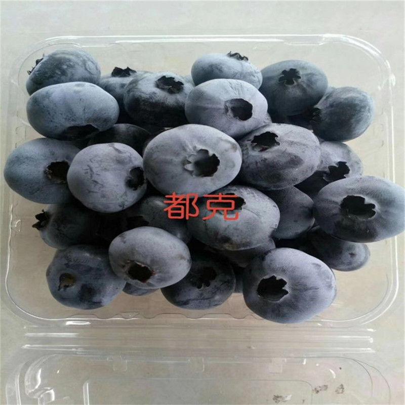 长沙望城蓝莓苗怎么种批发价格