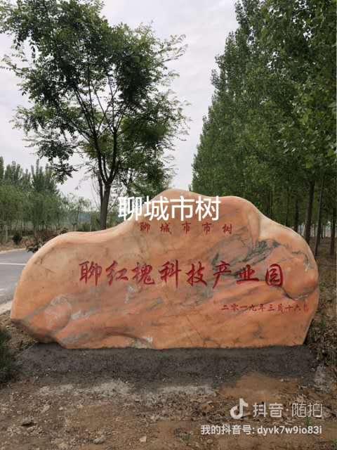 汉中12公分聊红槐红花国槐好成活,成活率高