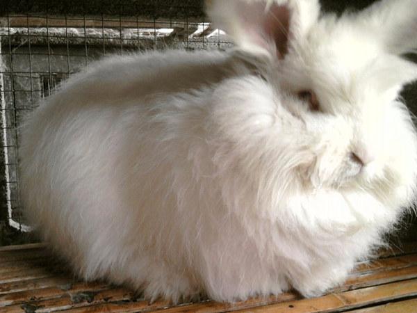 广西玉林养兔场养兔技术与兔疾病防治