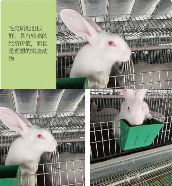 盘龙兔场联系方式肉兔前景如何
