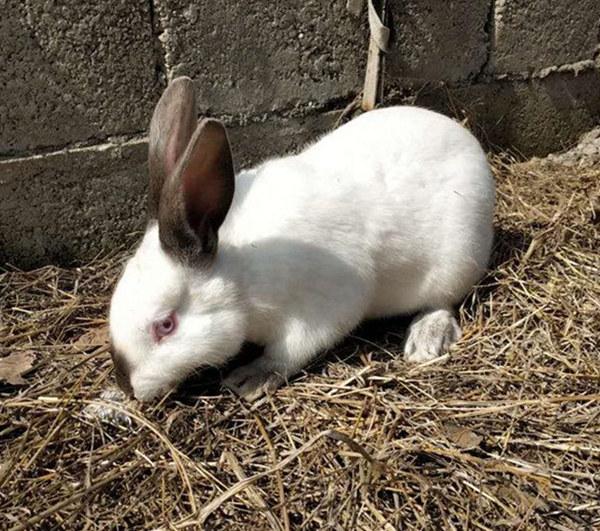 神湾附近养兔场肉兔前景如何