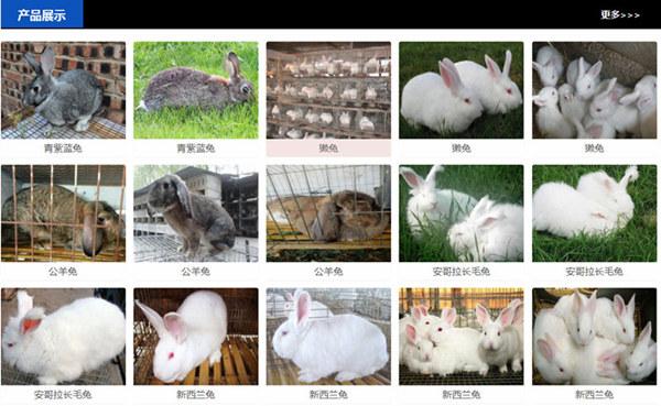 山东济南兔场电话肉兔养殖前景分析