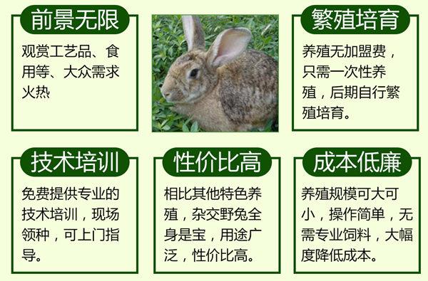 四川德阳兔场电话新手养兔注意事项