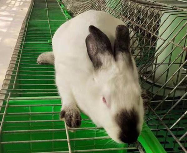 镇江润州兔子养殖场适合农村人的项目
