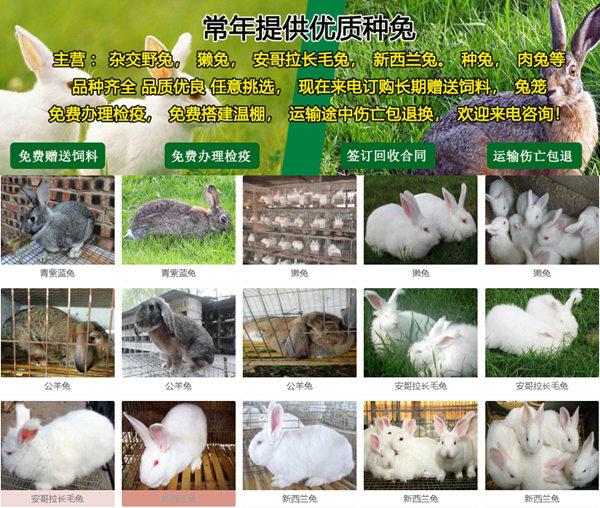 东莞企石本地卖大白兔小利润高