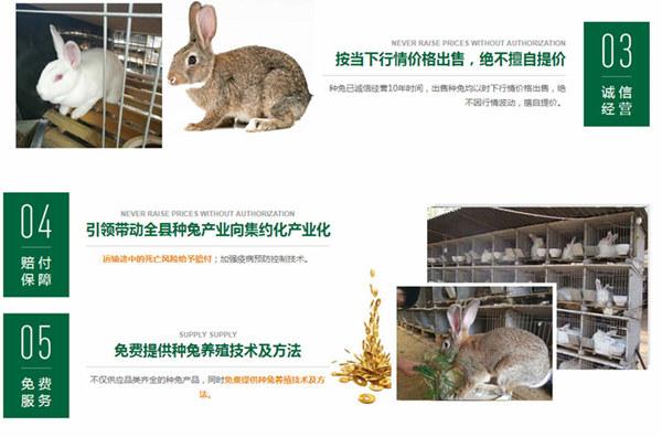 平遥本地兔场肉兔前景如何