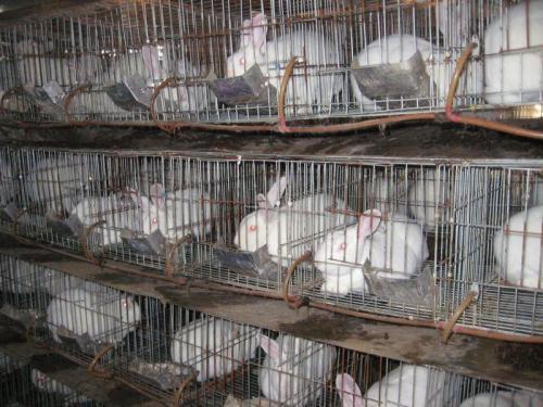 鄂州梁子湖兔场联系方式养成包回收