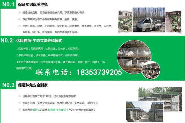 平顶山郏县本地卖长毛兔包教技术