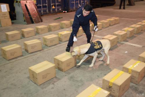 从天津进口种猪国际运输公司