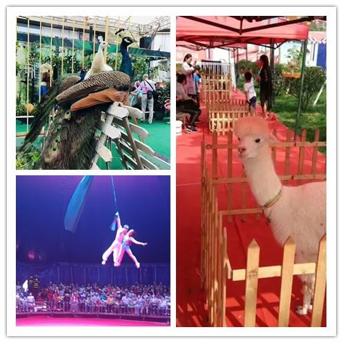 绥芬河市哪有萌宠展动物表演出租一手资源
