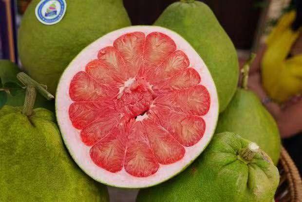 龙山泰国红宝石青柚苗2020年价格行情