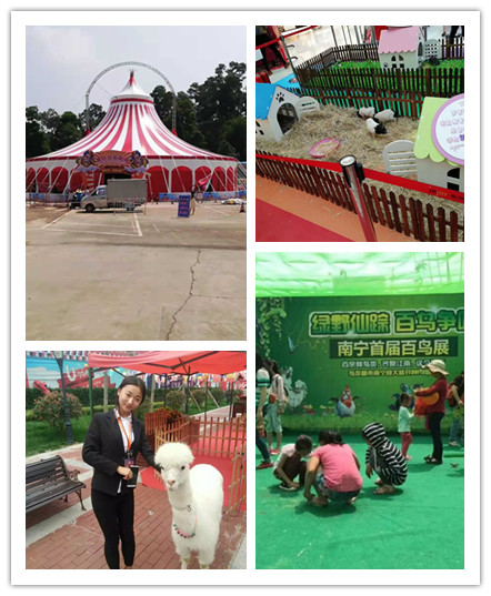 扬州市动物表演出租哪里有