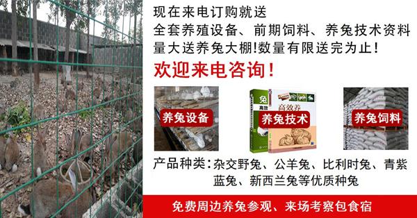 临泉种养殖场联系方式种兔养殖场