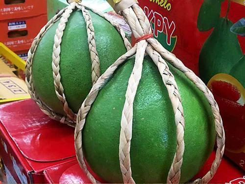 红河哈尼族彝族自治州河口瑶族自治县泰国一年红宝石青柚苗产地货源-永达果苗苗场