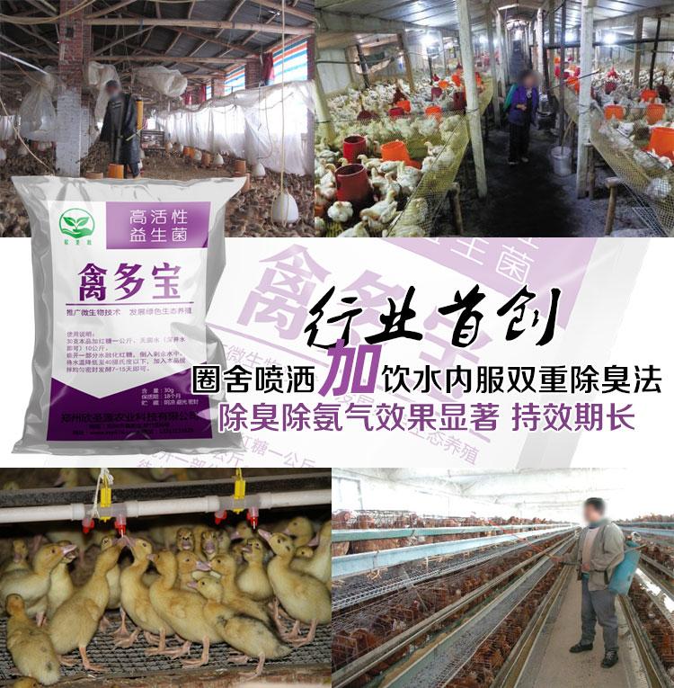 养鸽子生物消毒液益生菌除氨气那里有卖