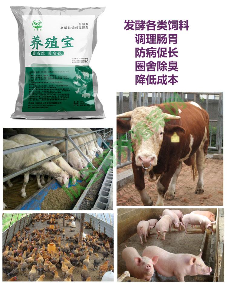 怎么样来防治牛吃豆渣后腹泻拉稀豆腐渣养牛使用技术