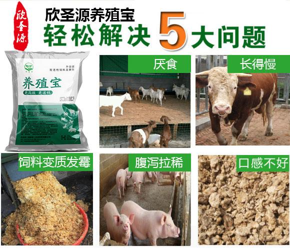 如何用豆渣喂牛,豆渣喂牛注意事项牛饲料发酵剂