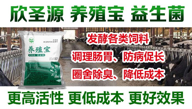 豆渣发酵剂的价格一般是多少经验分享
