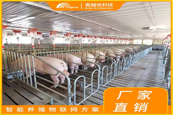 万载县如何养猪长的快推荐