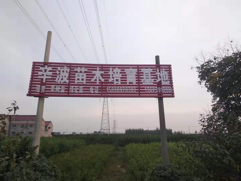 开封哪里有出售1公分桃树苗当地前景
