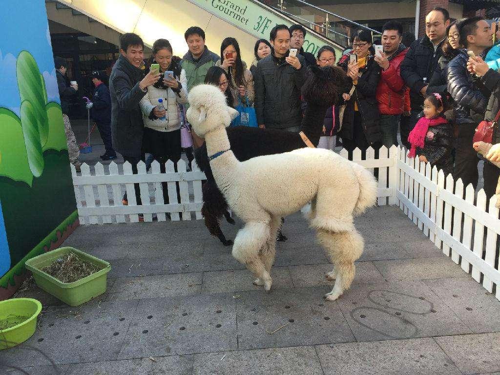 黑龙江哈尔滨哪里有宠物猫宠物狗展览出租同城