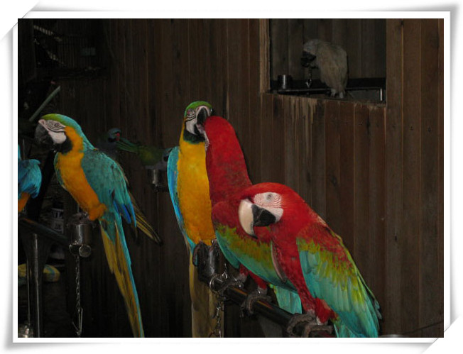 哪里有萌宠动物出租动物展览衡阳欢迎来访
