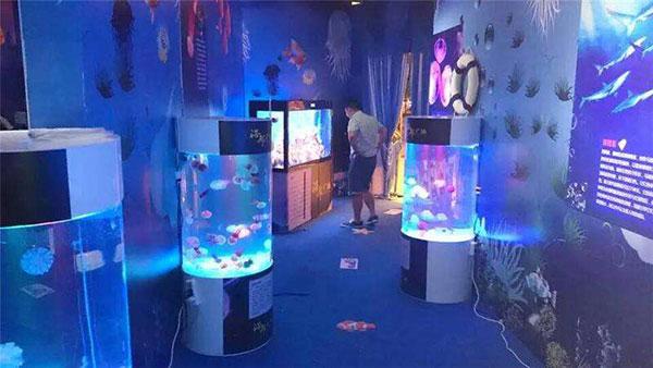 淮安袋鼠展览租赁公司欢迎来访