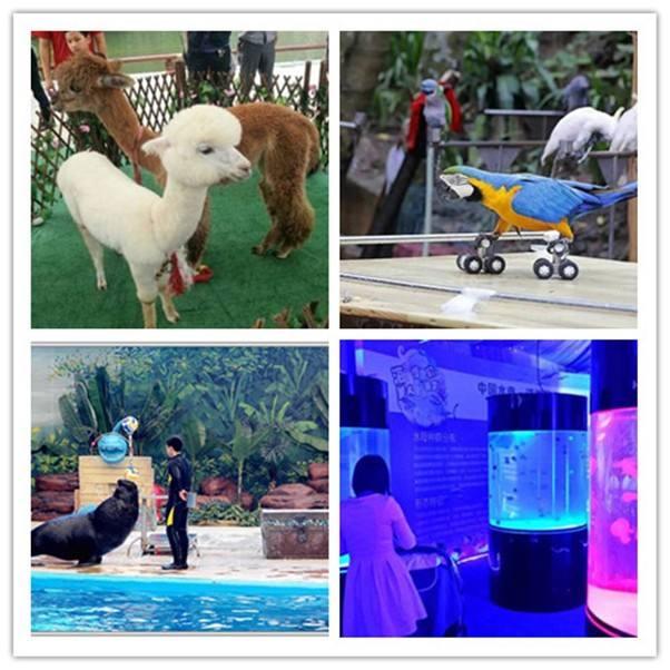 欢迎您青海西宁海洋动物展览公司本地