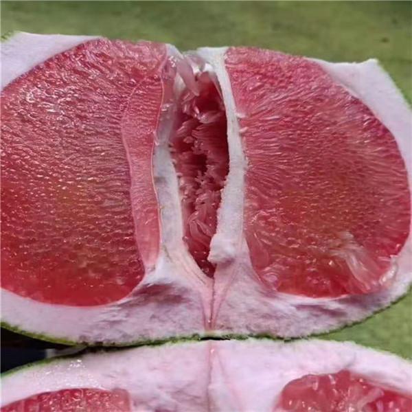 湖南省娄底市哪里有正宗红宝石青柚苗批发价格推荐正达蜜柚苗苗场