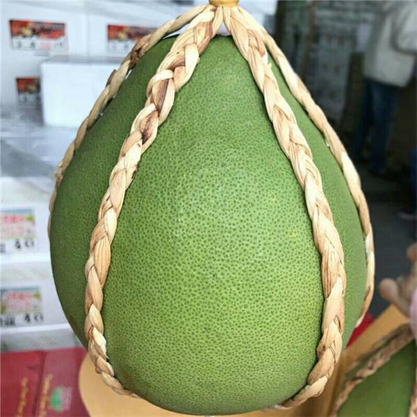 连州市哪里有正宗红宝石青柚苗出售蜜柚苗推荐正达蜜柚苗苗场