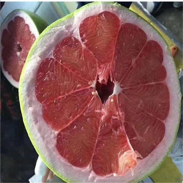两江新区北部新区哪里有泰国红宝石青柚苗多少价格