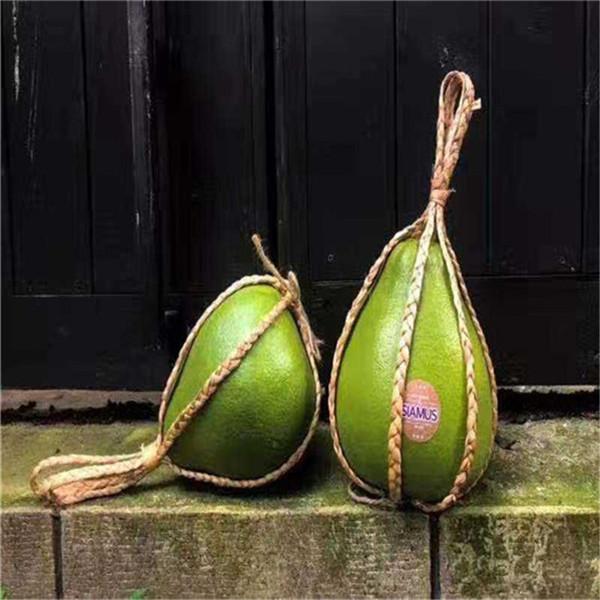 惠水泰国红宝石树苗正达基地/泰国蜜柚苗供应