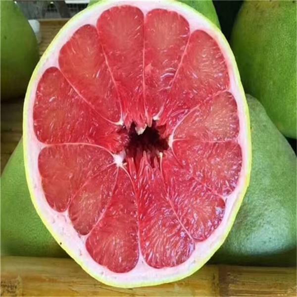 鄂州市梁子湖区泰国红宝石青柚苗基地直供