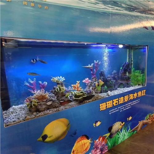 石嘴山市海洋生物鱼缸展出租