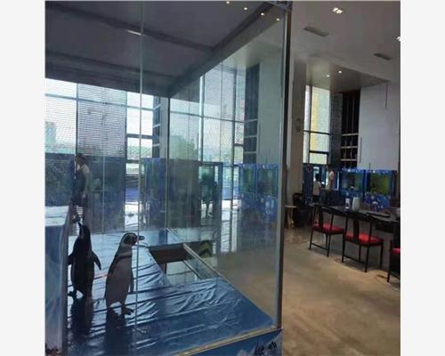 四川广安市鳄鱼表演出租