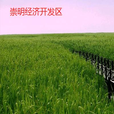 上海崇明税收返还需要注意什么
